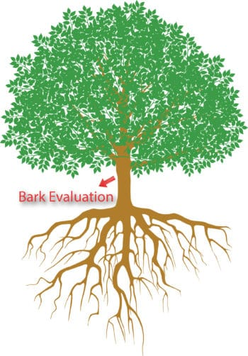Bark Evaluation
