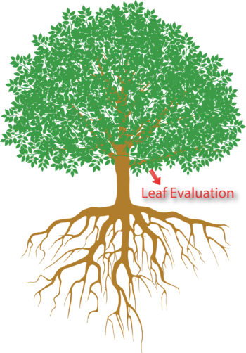Leaf Evaluation